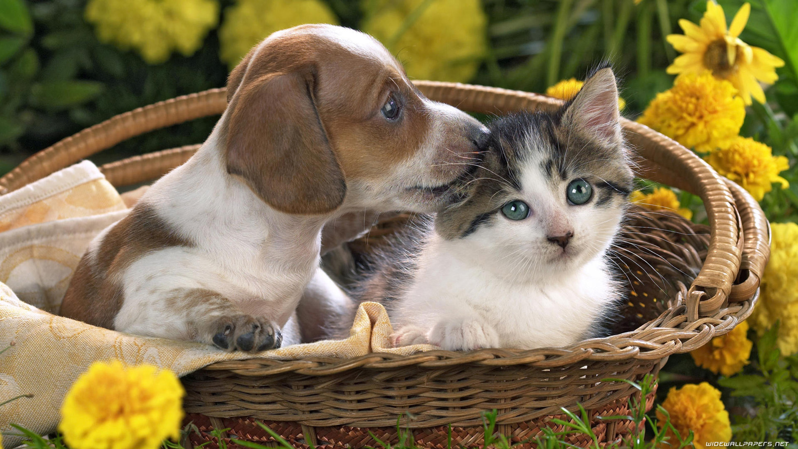 Cats And Dogs Desktop Wallpapers Hd And Wide Wallpapers