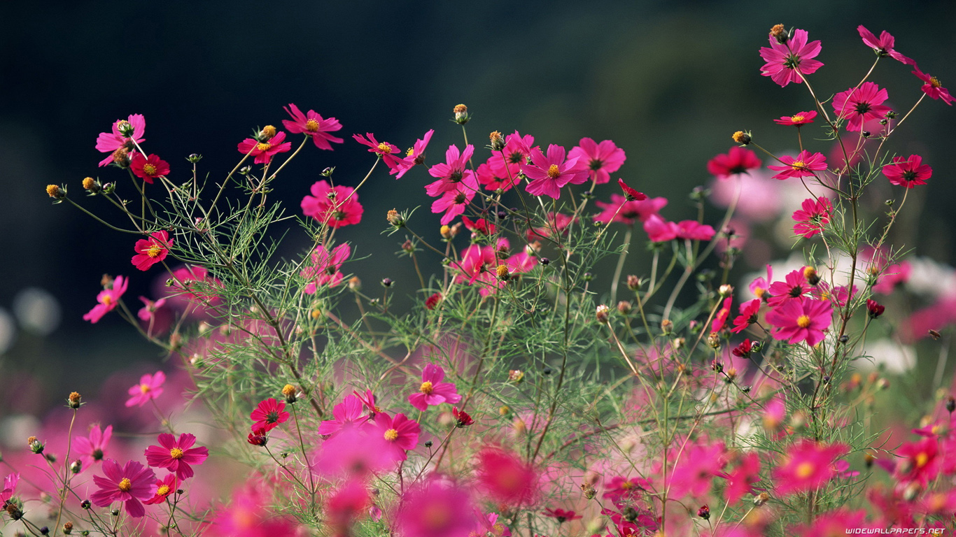 Flowers Desktop Wallpapers HD And Wide