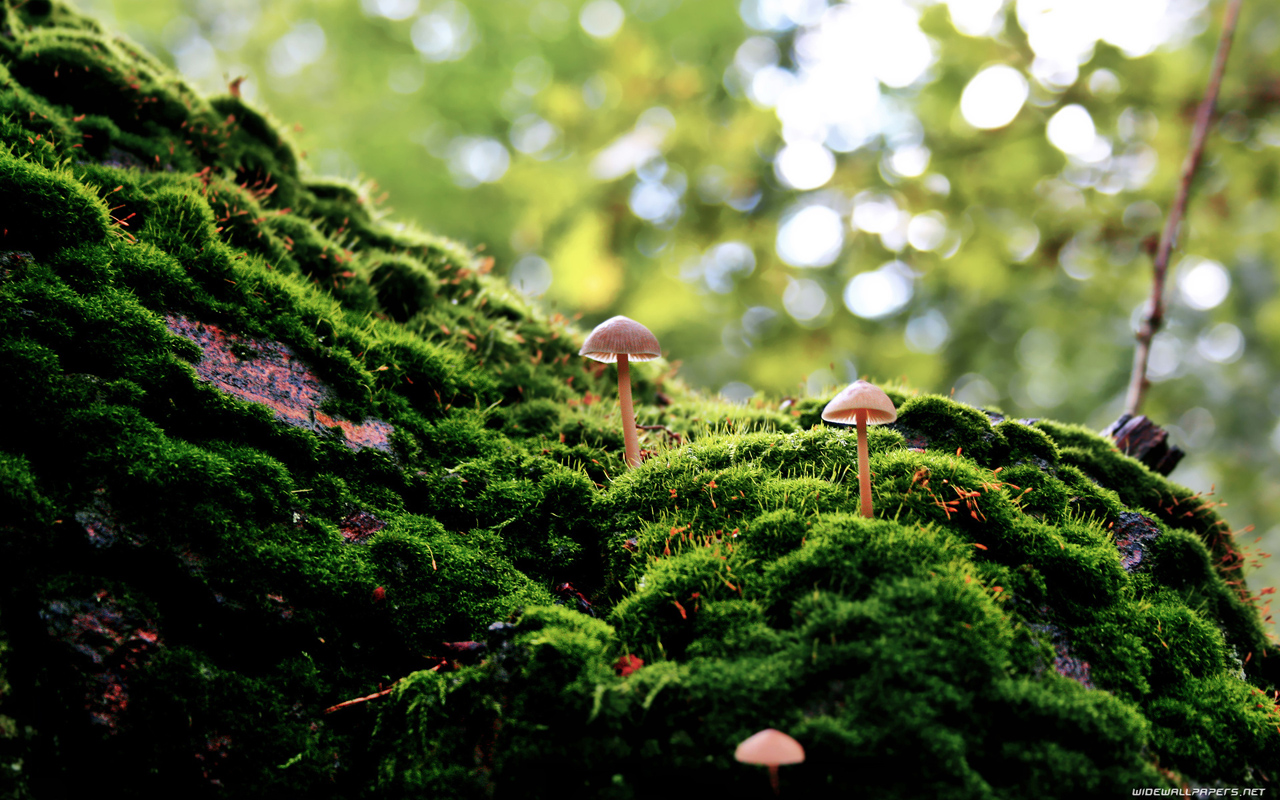 Amazing Green Mushroom Wide Images Liane Mcnish