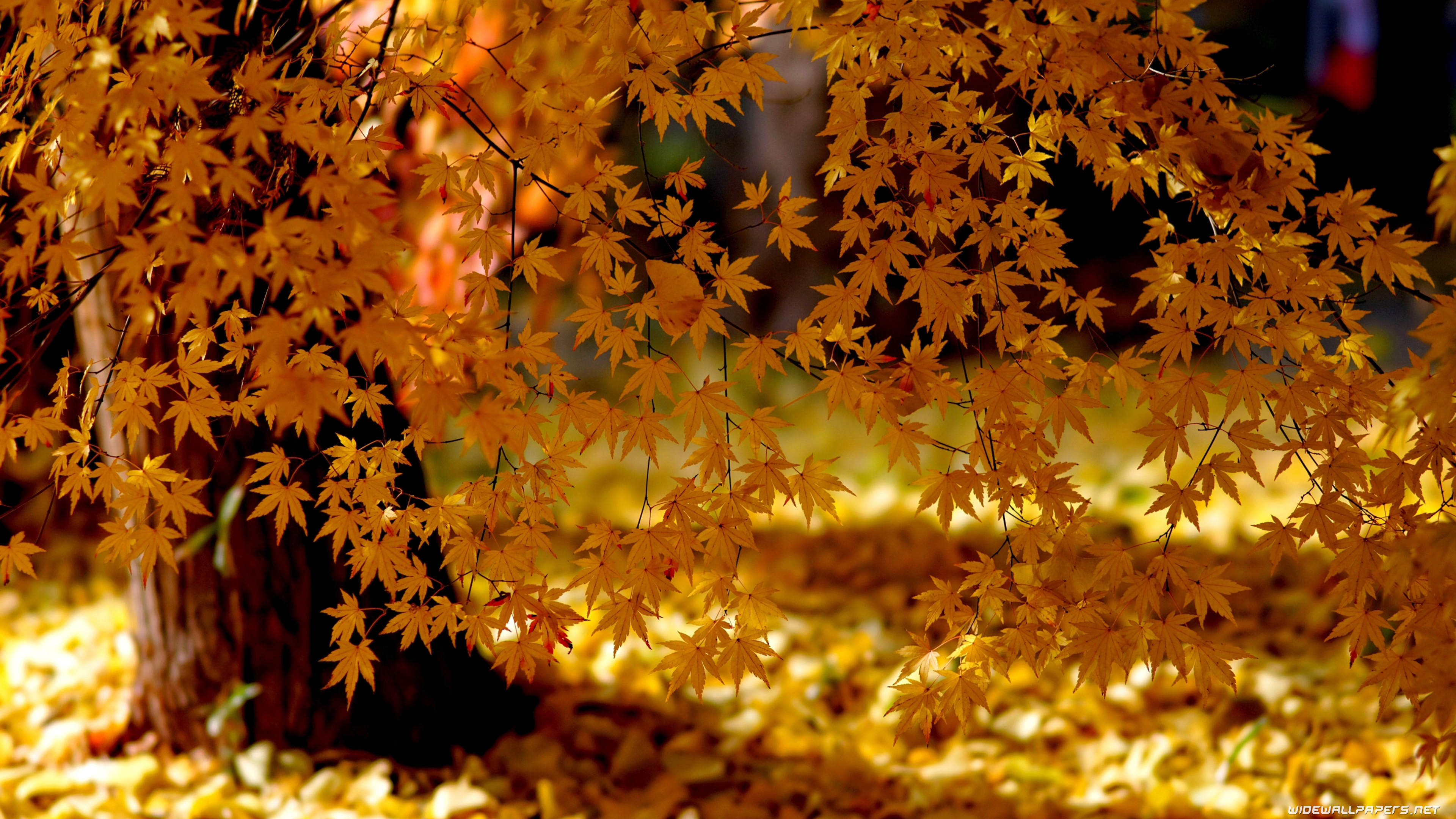 Autumn Wallpapers 4K Ultra HD
