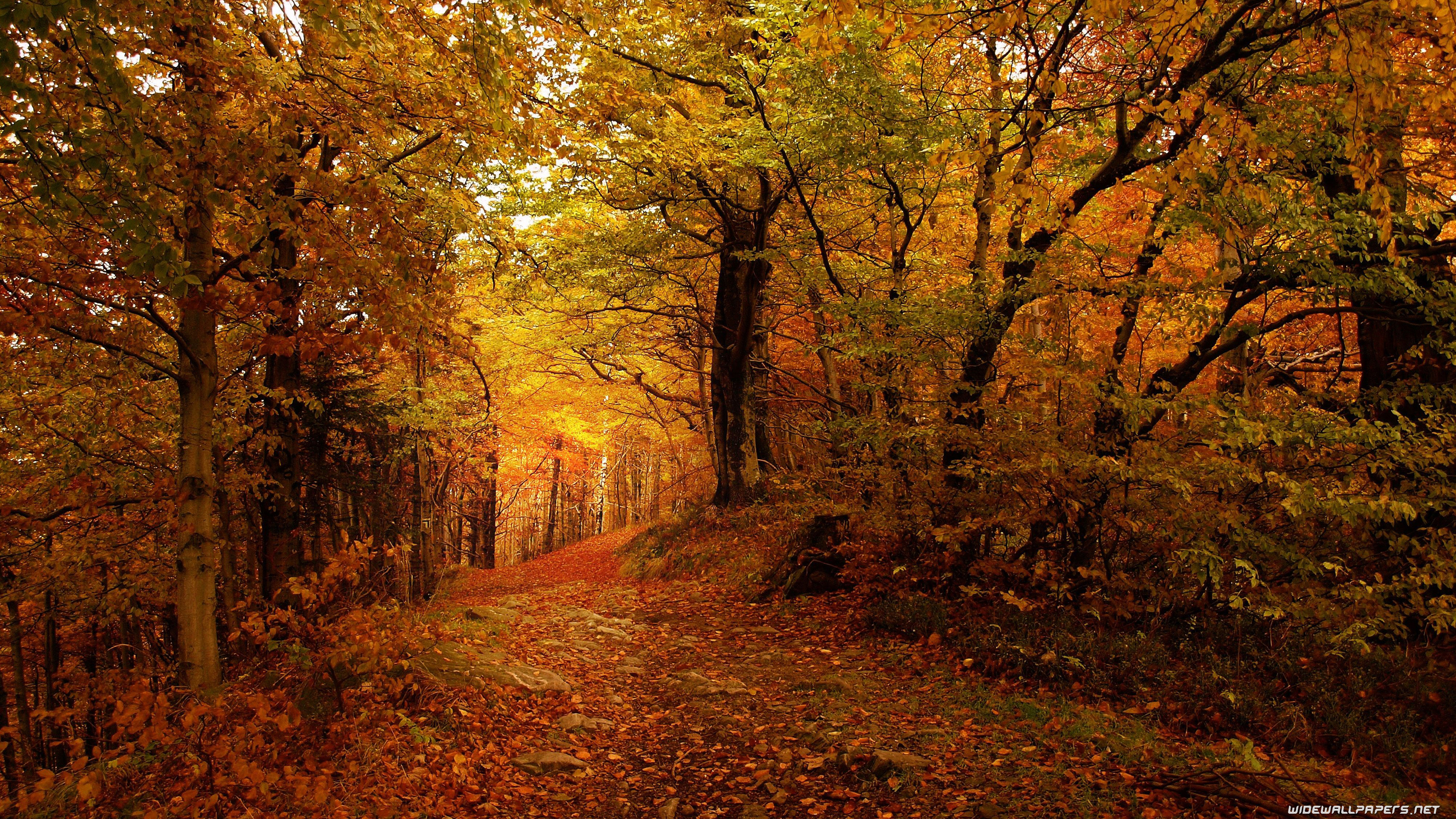 Autumn Desktop Wallpapers 4K Ultra HD